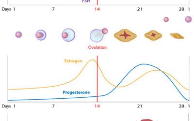 Progesteron Tekort (deel 1): Symptomen